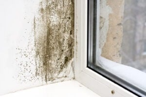 How to fix damp at home