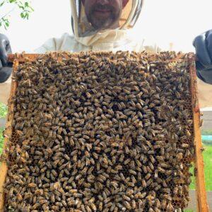 The Artisan Honey Company Photo 3