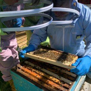 The Artisan Honey Company Photo 4