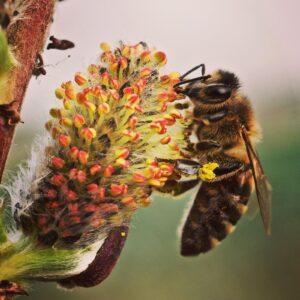 The Artisan Honey Company Photo 6