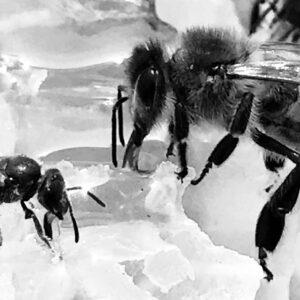The Artisan Honey Company Photo 8
