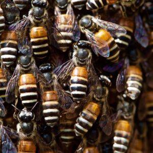 The Artisan Honey Company Photo 13