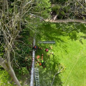 All Cut and Cleared Tree Surgery